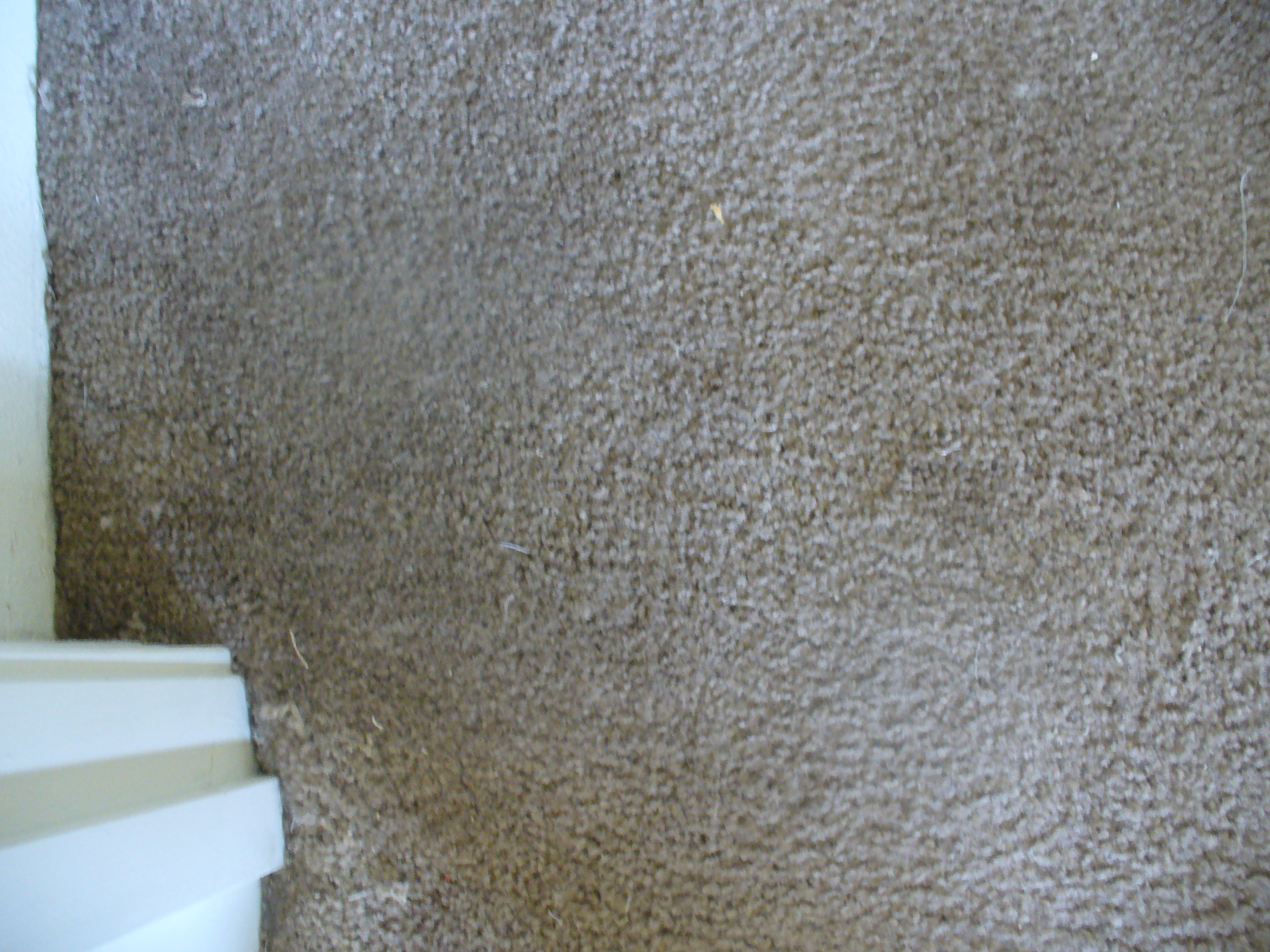 Crafter on Carpet Dye Before And After